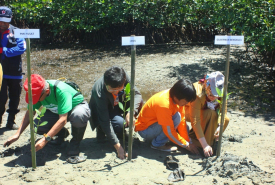 PMI Dirikan Mangrove Education Center